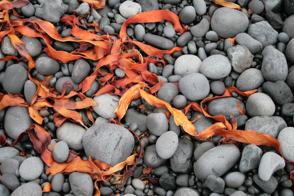 Steine mit Algen