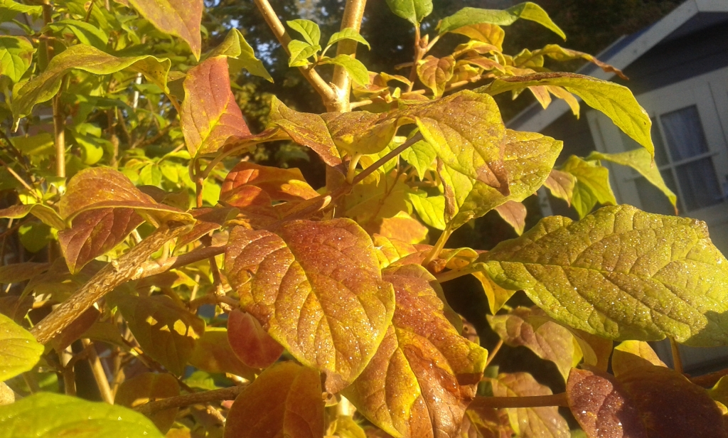 Erste Herbstblätter